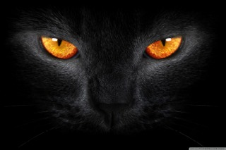 black cat bad luck for crows